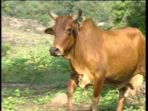 AIOU FA Dairy Farming Prog 01