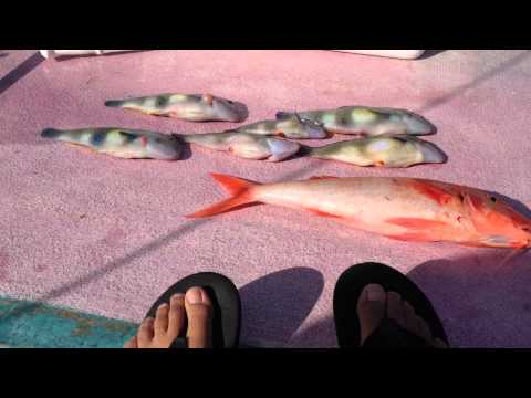 Bottom Fishing Oahu: Nabeta And Weke Ula