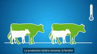 DeLaval Cow cooling - Douche à vache DeLaval