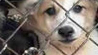 The Truth About Puppy Mills Thumbnail