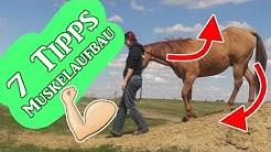 7 Tipps zum effektivem Muskelaufbau durch Bodenarbeit | Serenity Horses