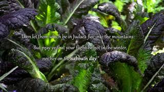 Музыка для молитвы. Инструментальная христианская музыка на арфе
