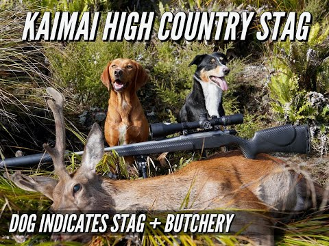 Kaimai High Country Stag - Dog Indicates Stag + Butchery