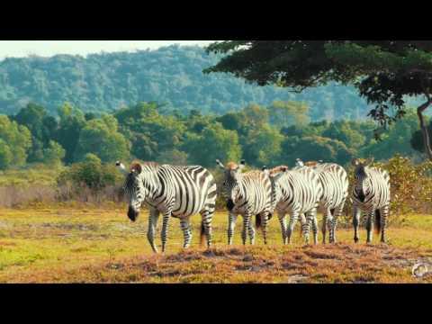 Wildlife Safari Park - Calauit Palawan