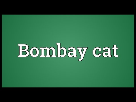 Bombay cat Meaning