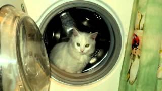 С моей стены под музыку Новые детские песни 1   Планета кошек  Picrolla