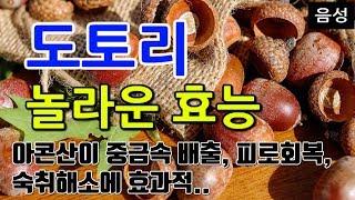 [#도토리효과] 도토리/도토리묵의 놀라운 효능 8가지 …