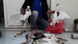 Ná Cao Su Bắn Chim - Tổng 7 con cò 1 cu cườm - Săn Cò Mùa Di Cư