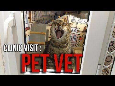 Clinic Visit : Pet Vet Animal Clinic