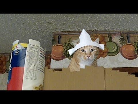 Monty Python with Cats - A Representative Parody