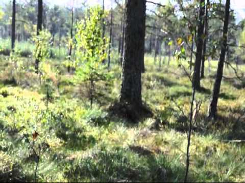 Aster på hare 2011.wmv