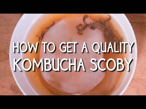 How to Get a Quality Kombucha Scoby