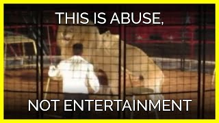 this-is-animal-abuse-not-entertainment