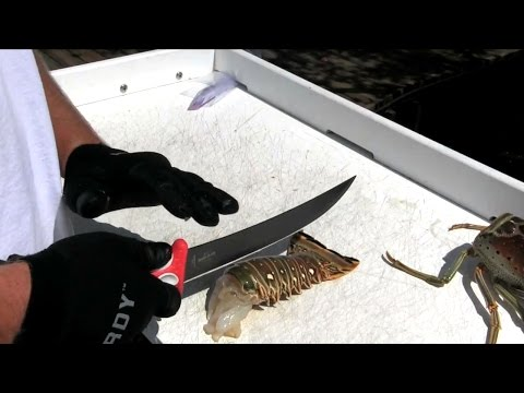 HOW TO CLEAN SPINY LOBSTER