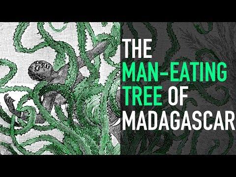 The Man-Eating Tree of Madagascar
