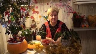 Персональный блог садовода и огородника Светланы Кацаповой 18 новогодний выпуск
