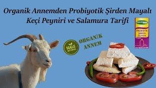 Organik Annemden Probiyotik Şirden Mayalı Keçi Peyniri ve Salamura Tarifi