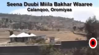 Seena Duubbi Miila Bakhar Waare by Jafar Ali