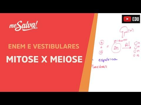 Me Salva! CIT24 - Citologia - Introdução à divisão celular 2: Mitose X Meiose
