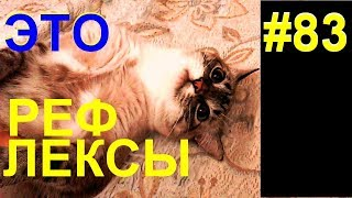 Рефлексы кота Беляшика