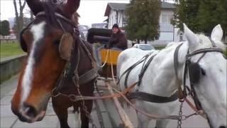 В Трускавце катаемся на карете
