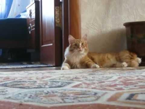 Кот ушёл / Cat gone