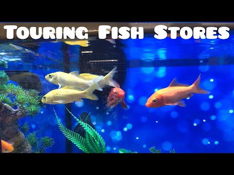 Fish Store Tour!!