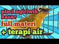Terapi Pleci Ngriwik Kasar Plus Terapi Air Untuk Pleci Bahan  Mp3 - Mp4 Download