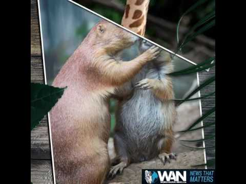 Happy Valentine's Day! From WAN & Peace 4 Animals
