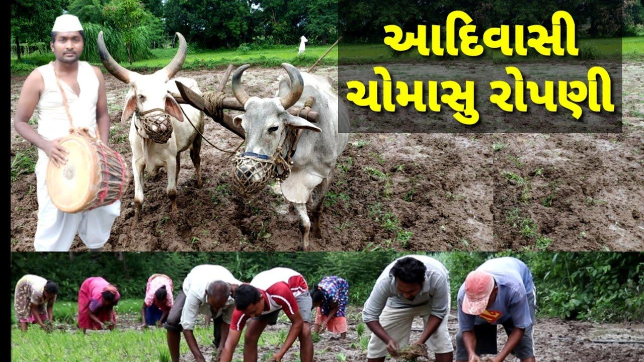 આદિવાસી ચોમાસુ રોપણી,| Aadivasi chomasu ropni | |Actor hitu video |