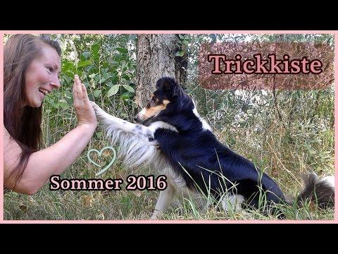 [Trickkiste] Unsere Tricks - Sommer 2016 - Rosi der Sheltie - 28 Monate