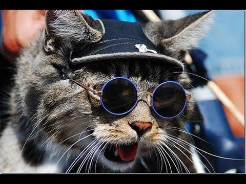 Видео смешные кошки под музыку