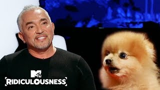 Can Cesar Millan Finally Calm Down Chanel's Dog? | Ridiculousness