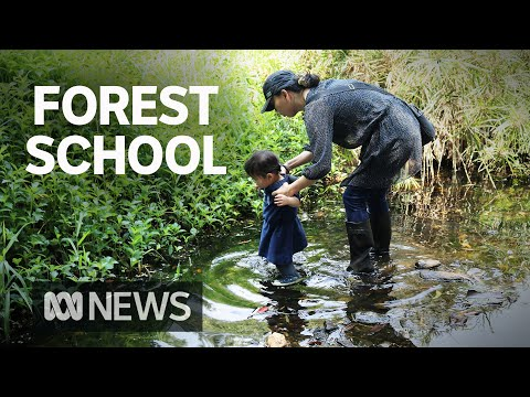 Forest schools: A growing alternative for parents wanting less screen time for kids | ABC News