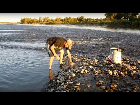 Placing Setlines for Catfish on the Yellowstone River! PT I