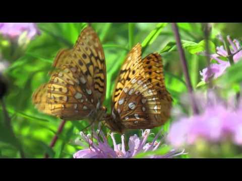 Nature Nerds Rule: Butterflies of the Bullitt Reservation