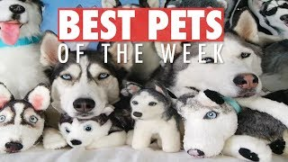 Best Pets of the Week | June 2018 Week 1