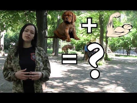 Вопрос: Как понять кого кошка выбрала хозяином?