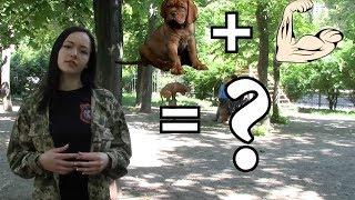 Как понять, считает ли щенок вас своим хозяином?   Налаживаем отношения со щенком   Урок 3
