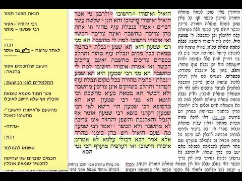בכורות י 10 שבת כ״ב ניסן תשע״ט Daf yomi Bechoros Shmuel Navon בכורות דף י