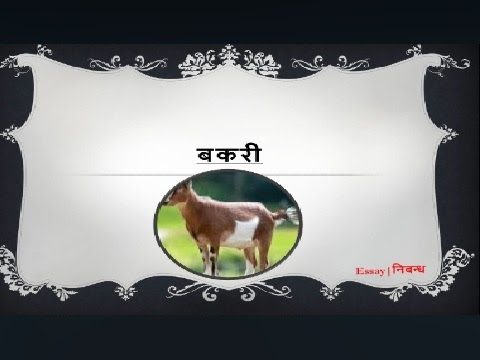 Hindi Essay On Goat For Kids      Youtube