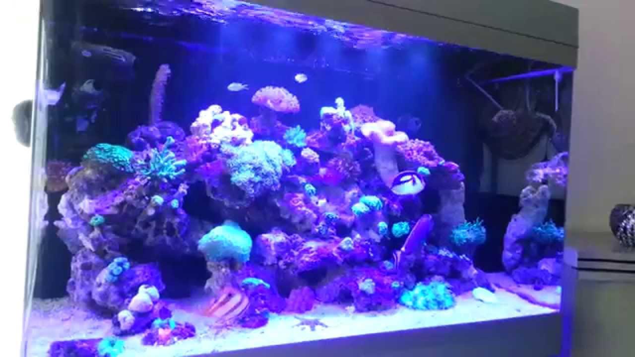 reef sea aquarium my red sea max 250 led youtube. Black Bedroom Furniture Sets. Home Design Ideas