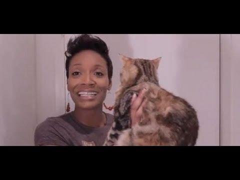 Meet My Tabby Cat Sonia