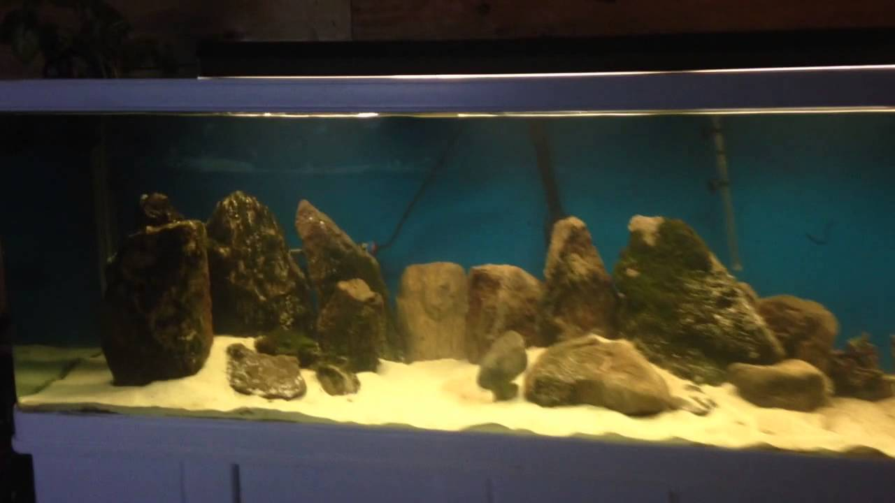 New 300gal jebo aquarium   YouTube