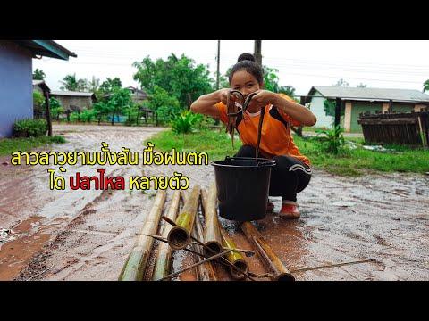 ยามบั้งลันยามเช้าหมานๆ//Lucky Day In The Morning With Eel Trap//Laos 🇱🇦 ຢາມບັ້ງລັນ