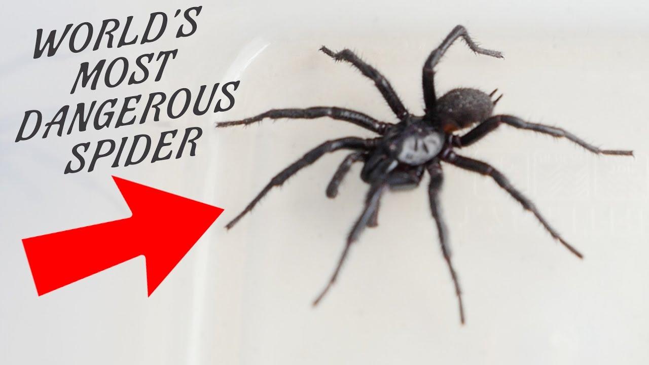 WORLDu0027S MOST DANGEROUS SPIDER IN MY KITCHEN!!! Ann Reardon   YouTube