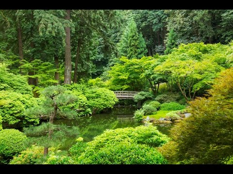 Relaxation Visualization Zen Garden Talk Down: Sleep & Stress Relief