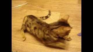 Буся-котенок инвалид ищет дом или домашнюю передержку