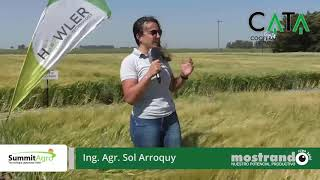 Parcela Summit Agro - Mostrando Fina 2020