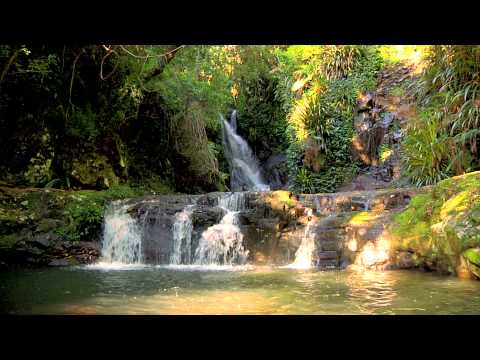 Rainforest Relaxation Video 3 Hours in HD